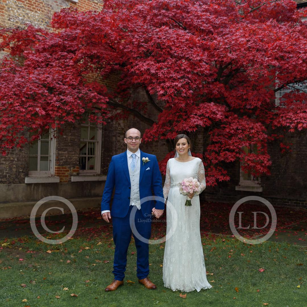 newlyweds under a maple tree at fulham palace wedding